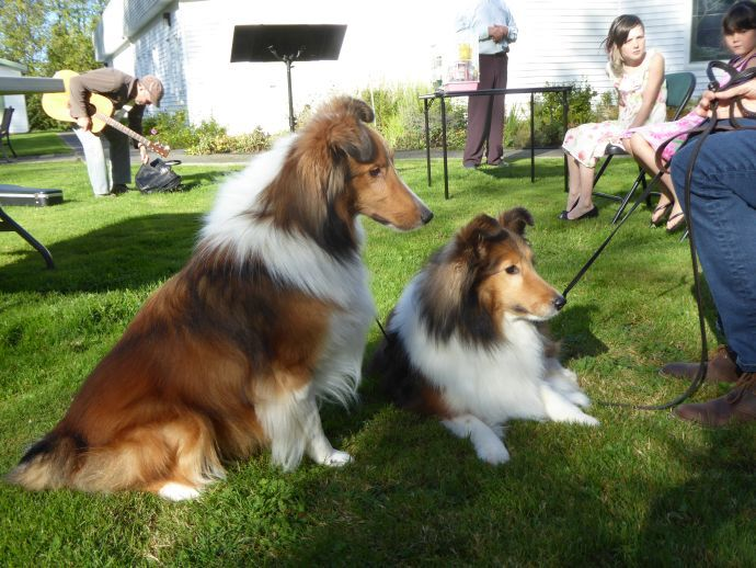 Blessing of the Animals service | St  Philip by-the-Sea