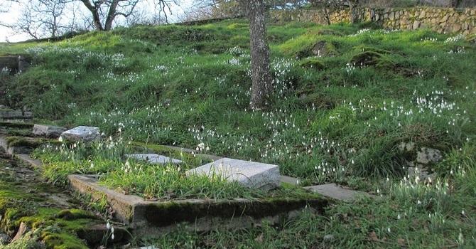 It's Spring in St. Luke's Cemetery image