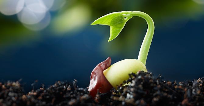 Good soil...  try hard....  tell more people....  aaahhhhh.. image