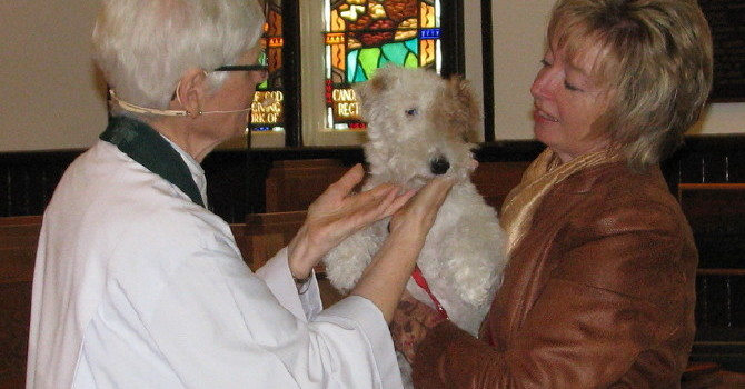 A Great Day for Dogs at the Blessing of the Animals Service image
