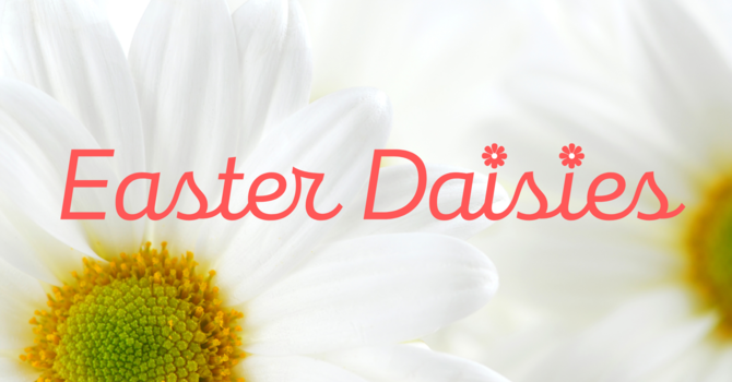 Order Your Easter Daisies! image