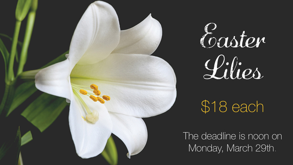 Easter Lilies $18