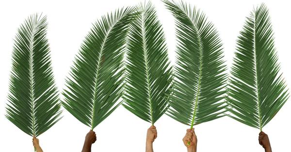 Palm Leaf Processional
