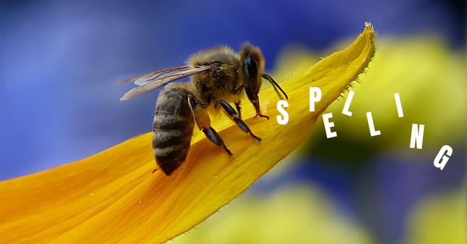 K-7 Spelling Bee