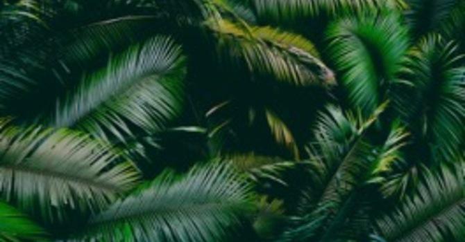 """Palm Sunday Love"""