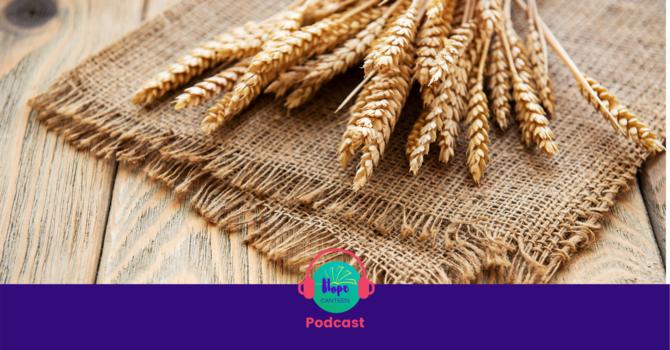 A Grain of Wheat Dies