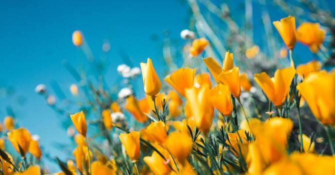 Easter & Early Spring Newsletter image