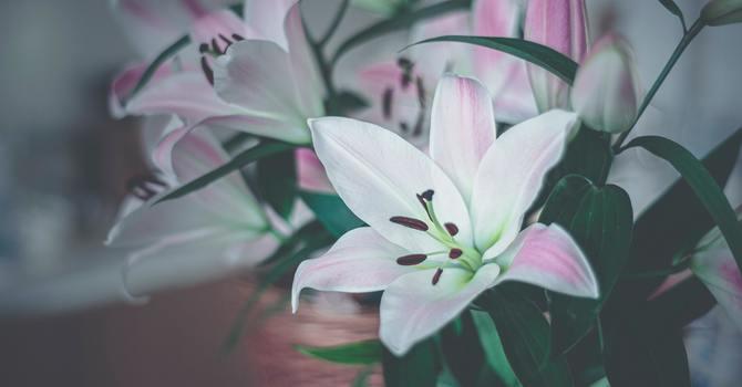 Easter Flower Dedications image