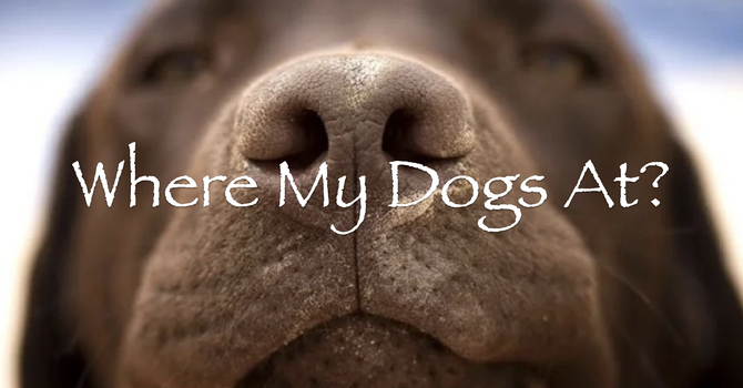 Where My Dogs At