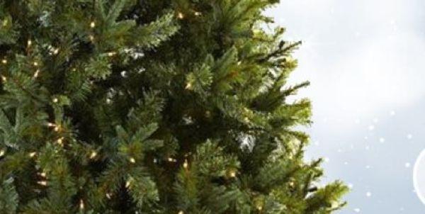 Christmas Giving Trees