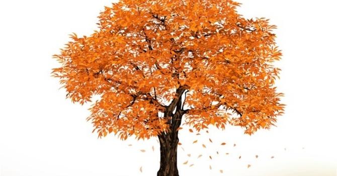 Autumn glory image