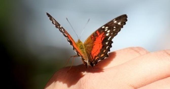 Of Butterflies and Gentleness  image