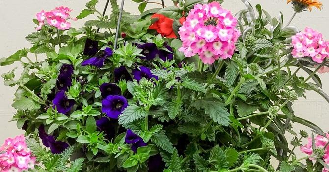 Hanging Flower Basket Fundraiser image