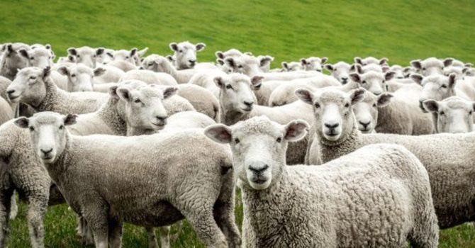 Jesus the Good Shepherd image