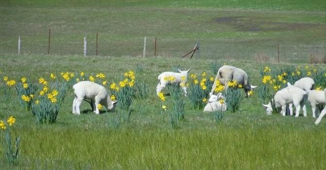 Fourth Sunday of Easter image