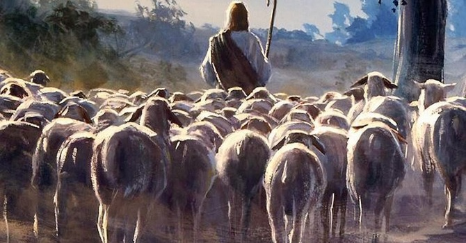 All in His Flock image