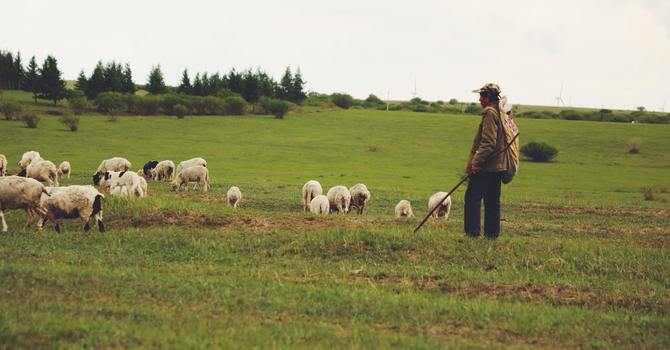 Shepherds, Be We All