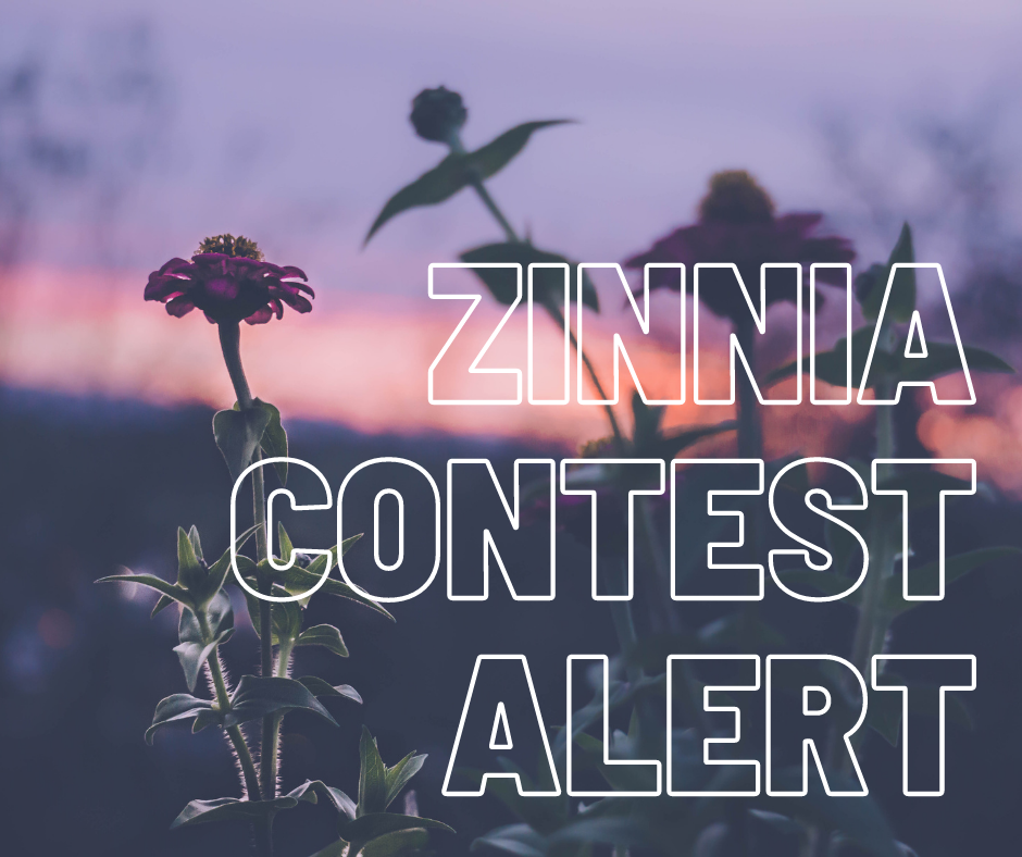Zinnia Competition
