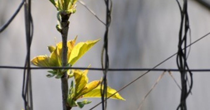 FOR CREATION: Earth Day Photo Video image