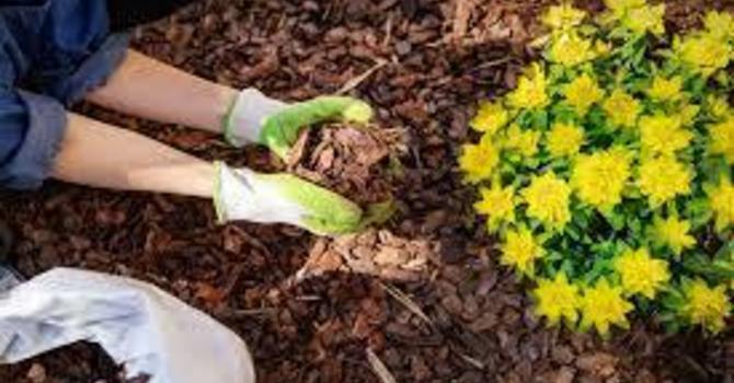 Mulching Party image