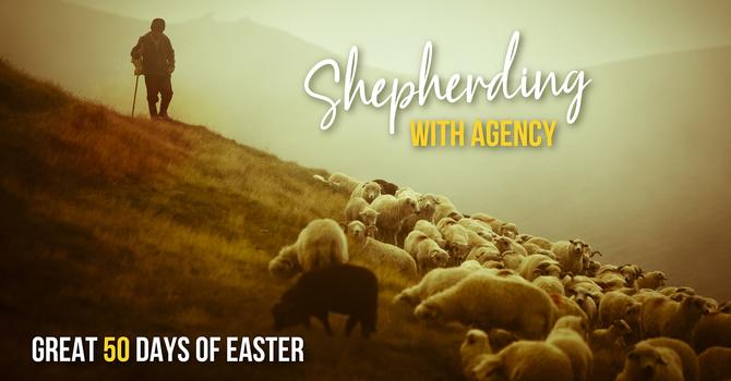 Shepherding with Agency
