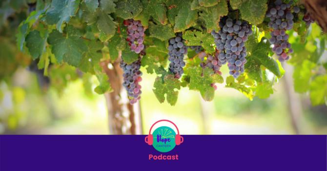 Abiding in Christ, the True Vine