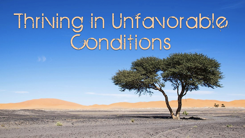 Thriving In Unfavorable Conditions