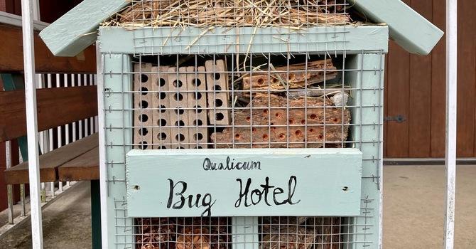 Qualicum Bug Hotel image