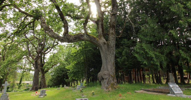 Tree of the Year Nomination image