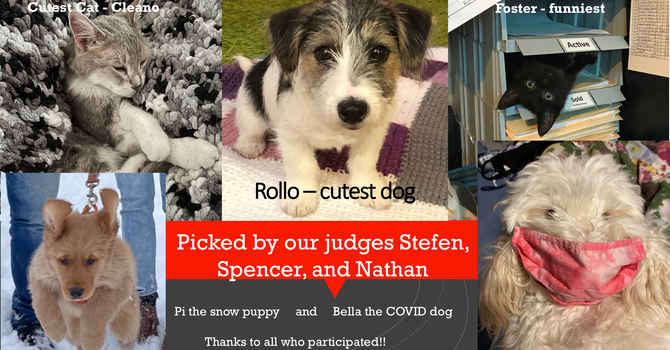 Covid Companions Pet Photo Contest image