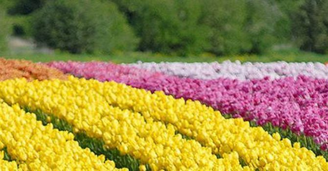 April 29 Olivet Update image
