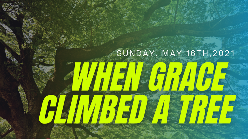 When Grace Climbed A Tree