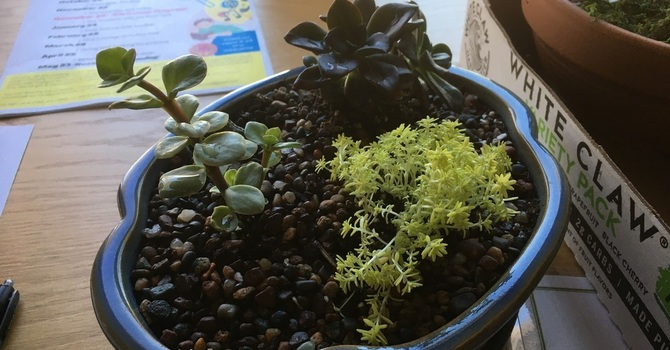 LIFE Series Holds Succulent Class image