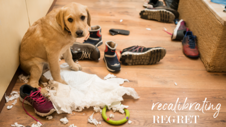 Recalibrating Regret