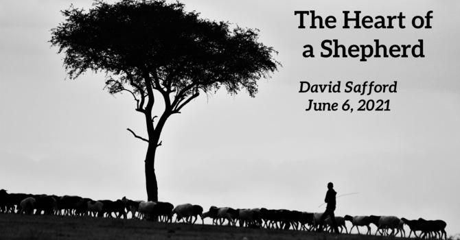 The Heart of a Shepherd