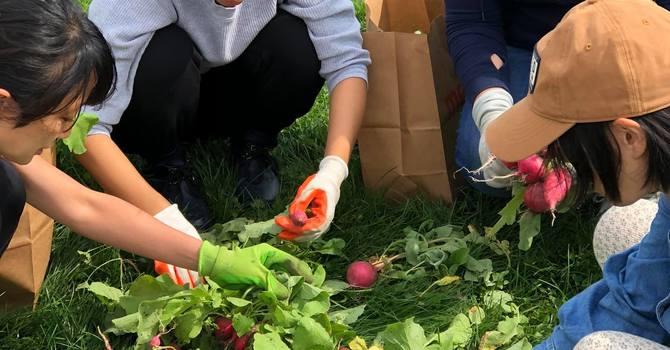 Community Garden Ministry