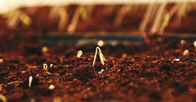 Trusting God while sowing seeds