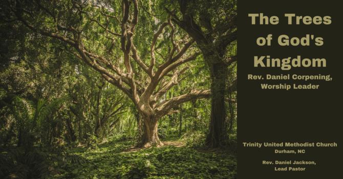 The Trees of God's Kingdom