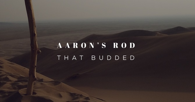 Aaron's Rod That Budded