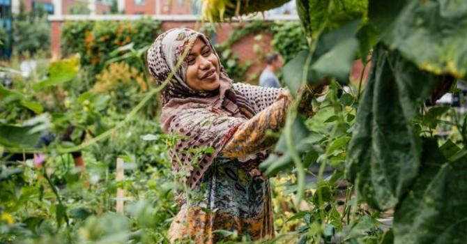 Where Food and Community Grow   image