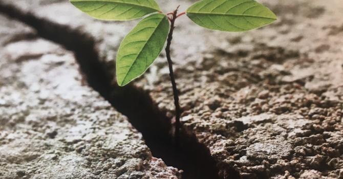 Resilience Bible Study