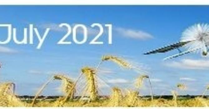 July 2021 Lifewire