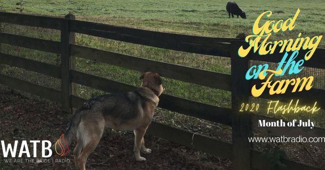 Good Morning on the Farm