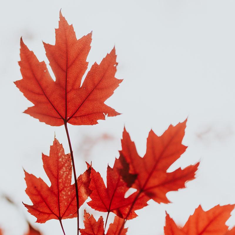 A Sombre Canada Day