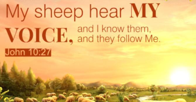 The True Sheep