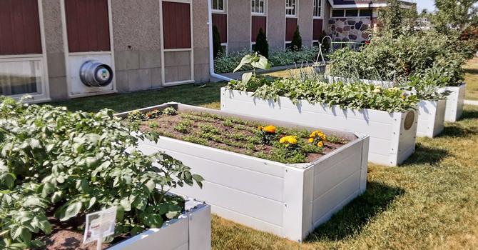 St. David's Garden Helping Beet Hunger