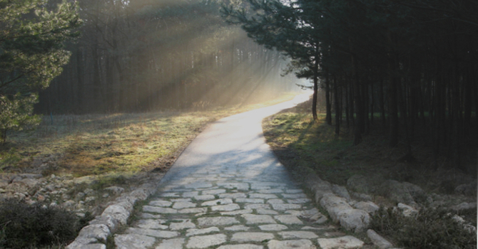 Walking Well Through Life