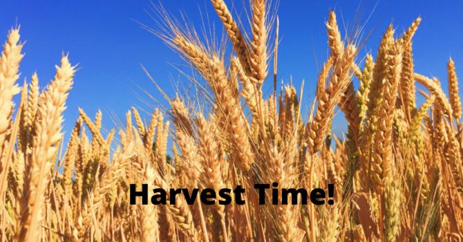 Harvest Time, Sunday July 18, 2021
