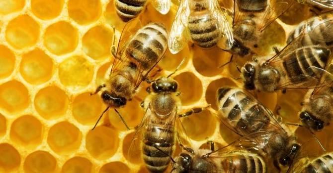 Timothy Urban Beekeepers