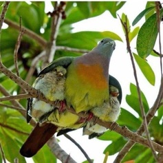 Birds%20under%20wings